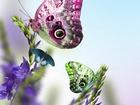 Muhteşem Renklere Bezenmiş Kelebekler