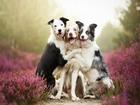 Mutlu Köpekler Yapbozu