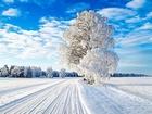 Norveçte Kış