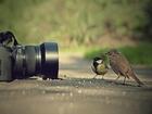 Objektife Poz Veren Kuşlar Yapbozu