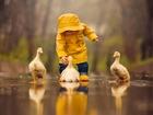 Ördekler ve Sevimli Arkadaşları