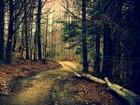 Orman ve Ağaçlar Yapbozu