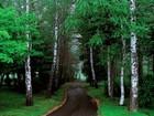 Orman Yolu Yapbozu