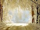Orman Yolunda Kar Manzarası