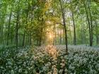 Ormana Bahar Geldi Yapbozu