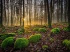 Ormanda Saklanan Yeşil Kuzular Yapbozu