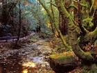 Ormandaki Saklı Hazine