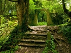 Ormandaki Gizli Kapı