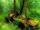 Ormandaki Kurumuş Ağaç Kütüğü
