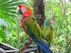 Ormandaki Papağanlar Yapbozu
