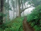Ormandaki Patika Yol