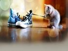 Oyun İsteyen Yavru Kedi Yapbozu