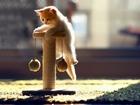 Oyuncu Yavru Kedi Yapbozu
