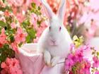 Pembe Gözlü Tavşan Yapbozu