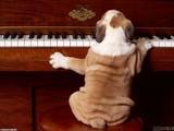 Piyanist Köpek Yapbozu