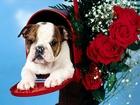 Posta Kutusundaki Köpek