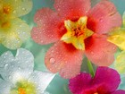 Renkli Çiçek Yapbozu