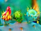 Renkli Kaktüsler Yapbozu