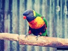 Renkli Papağan Yapbozu