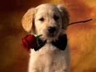 Romantik Köpek