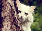 Saklanan Kedi Yapbozu
