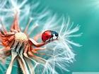 Şans Getiren Uğur Böceği