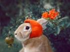 Şapkalı Sevimli Tavşan