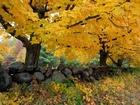 Sarı Yapraklı Orman Yolu