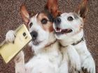 Selfie Çeken Köpekler