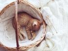 Sepette Uyuyan Kedi Yapbozu