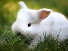 Sevimli Beyaz Tavşan