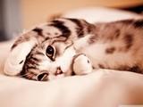 Sevimli Tembel Kedi Yapbozu
