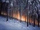 Sık Ağaçlar Arasından Sıyrılan Güneş