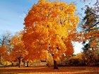 Sonbaharın Rengi Sarı Yapbozu