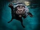 Su Altındaki Köpek Yapbozu