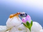 Su Damlası ve Karınca