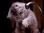 Su İle Tanışan Kedi Yapbozu