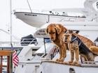 Teknedeki Köpekler