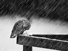 Tipiden Kaçamayan Kuş