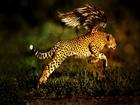 Uçan Jaguar