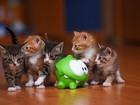 Ufacık Kediler Yapboz
