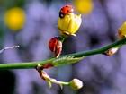 Uğur Böcekleri Yapboz