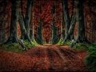 Ürperten Ağaçlıklı Yol