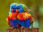 Üşüyen Papağanlar
