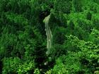 Uzayıp Giden Yeşil Orman Yolu
