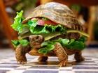 Vejeterjan Kaplumbağa Hamburgeri Yapbozu