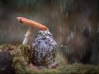 Yağmurda Islanan Kuş Yapbozu