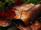 Yaprak Dökümü - Sonbahar Yapbozu