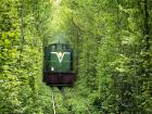 Yeşil Tünel