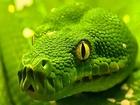 Yeşil Yılan Yapbozu